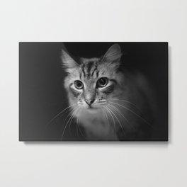 Black & White Cat Metal Print