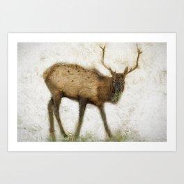 Grand Canyon Elk No. 2 Wintered Art Print