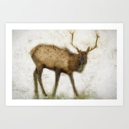 Grand Canyon Elk No. 2 Wintered Art Print