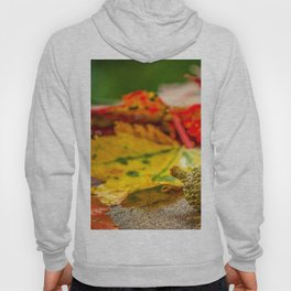 Autumn Leafs (Color) Hoody