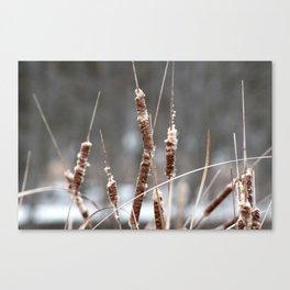 Cotton Tails Canvas Print