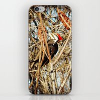 woody iPhone & iPod Skins featuring Woody by DeLayne