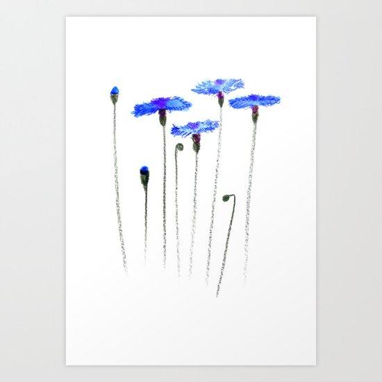 cornflowers Art Print