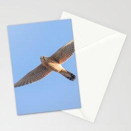 Common Kestrel (Falco tinnunculus). Common Kestrel in flight Stationery Cards
