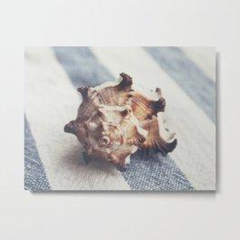 Shell 4 Metal Print