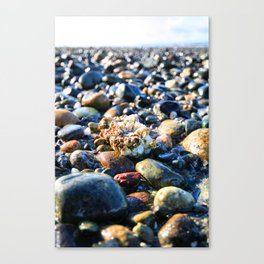 Lonley Barnacle Canvas Print