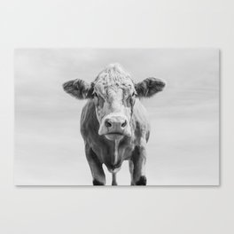 Animal Photography | Cow Portrait Minimalism | Farm animals | black and white Canvas Print