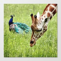 friendship Canvas Prints featuring Friendship by Nishanth Gopinathan