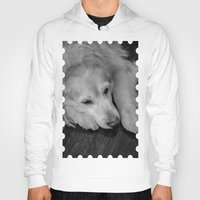 golden retriever Hoodies featuring Golden retriever by Mauricio Togawa