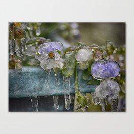 Pansies on Ice Canvas Print