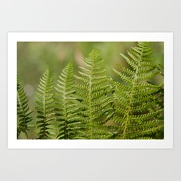 Green Ferns Art Print