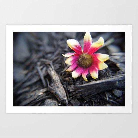 Fallen Flower Art Print