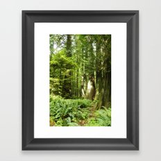 Cathedral Grove Framed Art Print