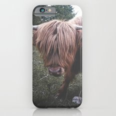 Highland cow Slim Case iPhone 6s