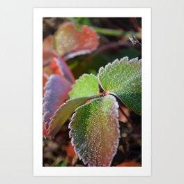 Strawberry frost Art Print