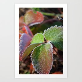 Strawberry frost Art Print
