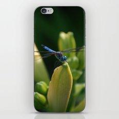 Dragon Fly 1 iPhone & iPod Skin