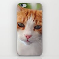 """garfield iPhone & iPod Skins featuring Garfield - a red cat by Michele """"Sonik"""" Bruseghin"""