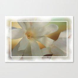 White Magnolia Blossom  Canvas Print