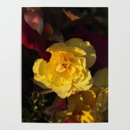 Yellow panache Poster