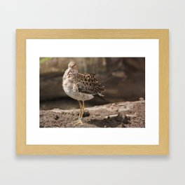 Wearing brown Framed Art Print