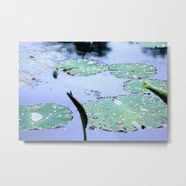 Water Droplets on Lilypads Metal Print