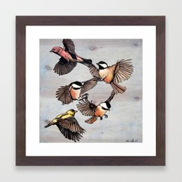 Flying Finches and Chickadees Framed Art Print