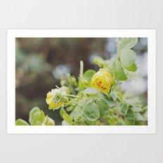 Rosa amarilla Art Print
