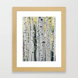 Aspen Trees Framed Art Print
