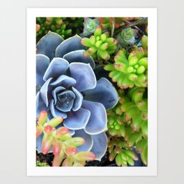 Succulent Bunch Art Print