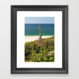 Foxglove On The Beach Framed Art Print