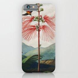 Robert John Thornton - Large–Flowering Sensitive Plant iPhone Case