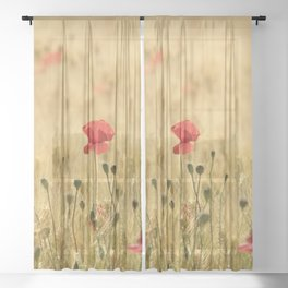 Dream poppies. Spring fields. Early morning Sheer Curtain