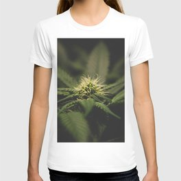 Plant Medicine T-shirt