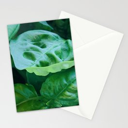 Green Basil Stationery Cards