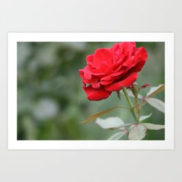 Red Forever Art Print
