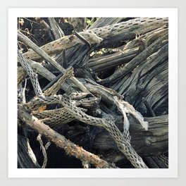 Driftwood In Bucolic Repose Art Print