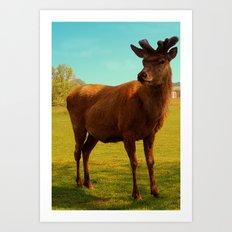 Young Deer (Cervidae) Art Print