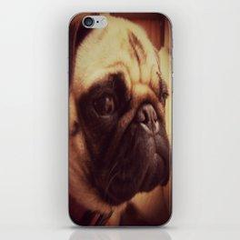 Chia Pug iPhone Skin