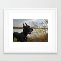 great dane Framed Art Prints featuring Great Dane by Allegranicolephotography