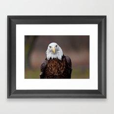 Bald Eagle Face Framed Art Print