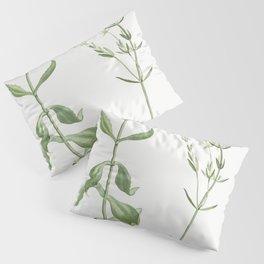 Kalanchoe Spathulata (Never Die) from Histoire des Plantes Grasses (1799) by Pierre-Joseph Redoute Pillow Sham