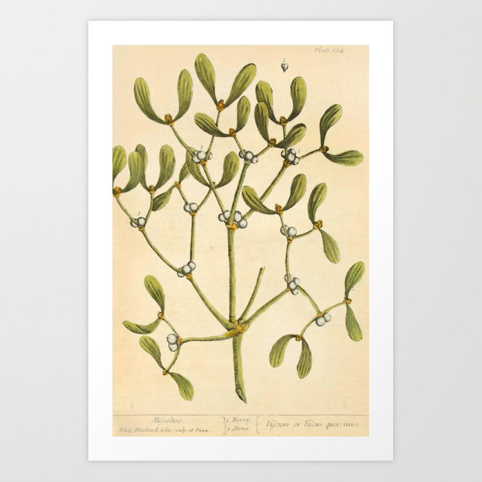 "Mistletoe by Elizabeth Blackwell from ""A Curious Herbal,"" 1737 (benefiting The Nature Conservancy) Art Print"