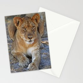 Young lion - Africa wildlife Stationery Cards