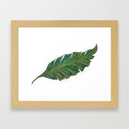 Australica Banana Leaf Framed Art Print