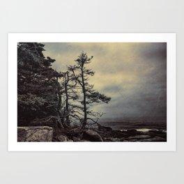 Schoodic Peninsula Art Print