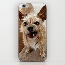 Grumpy Dog iPhone Skin