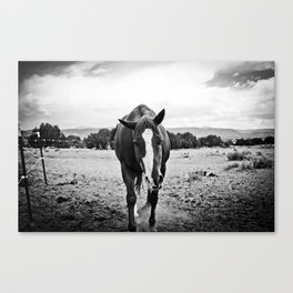 Desert Horse, II Canvas Print