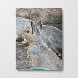Wallaby Way Metal Print