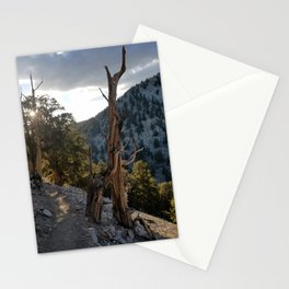 Ancient Bristlecone Pine Forest #2 Stationery Cards